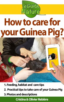 How to care for your Guinea Pig? by Olivier Rebiere from PublishDrive Inc in Pet category